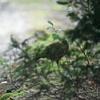 山道で出会ったこの鳥は何?