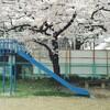 枚方辺りの桜散歩  後編