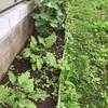 それぞれ違う夏野菜の成長