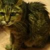 猫と食事-愛猫テリーの思い出4-