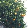 九州パーフェクトツアー 5 リンゴとミカン
