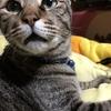 我が家の猫さんのおやつ(かつおぶし)