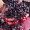 赤ワイン醸造の流れ - 作業の順番と対応するフランス語を覚えよう!