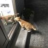 突然ですが自己紹介ならぬ猫紹介のお知らせです