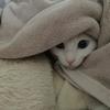 可愛い猫の顔文字まとめ ฅ(๑'Δ'๑)ニャァァァン