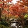 3密回避ドライブ その6 ~東京のど真ん中で最高の紅葉を見る「八芳園」~