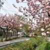 「日米中韓関係」とジェラルド・カーティスさんのメッセージ