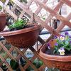 花苗を植え替える