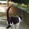 200㎜F4.0一本で野良猫撮影