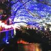 東京の桜🌸