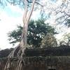 #アンコールワット個人ツアー(282)#タ・プローム遺跡とベンメリア遺跡の人気