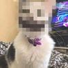 【衝撃】山田孝之すぎるネコが見つかるwwwww