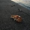 館山築港でアジ釣!(2018年11月17日)