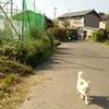 お散歩タイム(^o^)