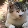 【唐澤山神社】ネコがたくさん!城跡に作られた観光にオススメの神社:栃木県佐野市