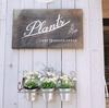 門前仲町PlantsCafeのおしゃれランチ日記。6月のイベント会場を下見したよ