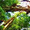 島旅でアドベンチャー体験を〜西表島で人気の観光アウトドア体験