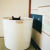 新しい猫トイレ