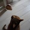 中村倫也さんと猫のミレーヌ