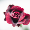 伝説のプレイボーイ:ドンファンという赤いバラ