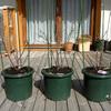 連休中の庭作業