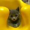 猫を飼ったらYoutube投稿にハマるようになった件