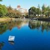 鹿沼公園の池(神奈川県相模原)