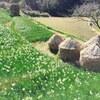 週末田舎暮らしで「季節の移ろい」を感じる(冬 ⇒ 早春)