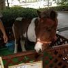 7月4日&5日は浜松城公園で「第52回アース・エコ・フェア」