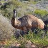 オーストラリア 野生で出会った動物たち