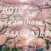 相模原市役所の桜:Sony α7c + SEL35F14GM