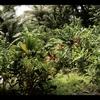 【ITO-ヒロ】ヤナの森の僕らの生活。