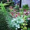9月の花壇、、、、