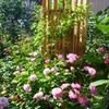 今の僕の庭