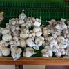 【近畿「道の駅」スタンプラリー】黒豆ソフトが美味しい!瑞穂の里・さらびき(京都府船井郡)