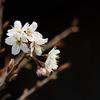 香り立つ春の訪れ