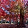 函館「香雪園」で紅葉フェチの紅葉おさめ