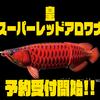 【DRANCKRAZY】リアルビッグベイト「皇スーパーレッドアロワナ」通販予約受付開始!