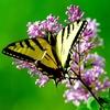 オースティンの蝶々:「生徒の学びを促進する評価」のすばらしい例
