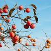 人生に似たり、美味しい果実とそうではない果実