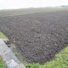 田んぼの耕起完了、雨降りで何も出来ず。
