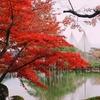 金沢市兼六園紅葉
