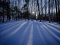 スノーシューで雪中の森のなかを自由に歩き回る快感!
