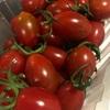 台湾のフルーツトマト