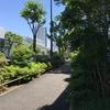 初夏の代官山から渋谷を散歩して