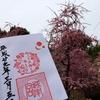 しだれ梅と椿まつり限定御朱印 京都・城南宮