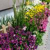 アパートの庭 〜花壇の花たち  その2〜