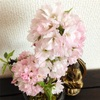 今日の桜井。(満開)と、ときどき仏。