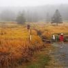 八ヶ岳の白駒池周辺を散策してきました。
