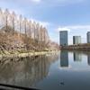 """大阪城の桜""""からの""""鶏系ラーメン"""